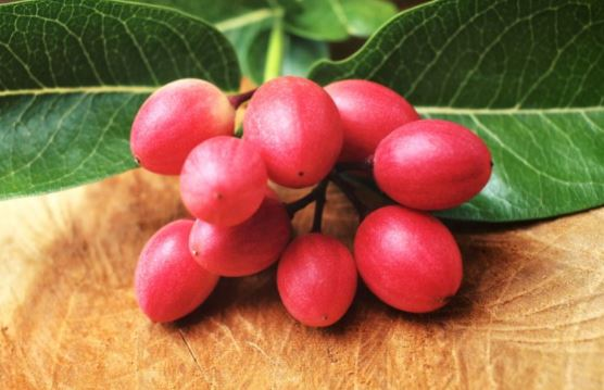 5 powerful health benefits of Miracle fruit