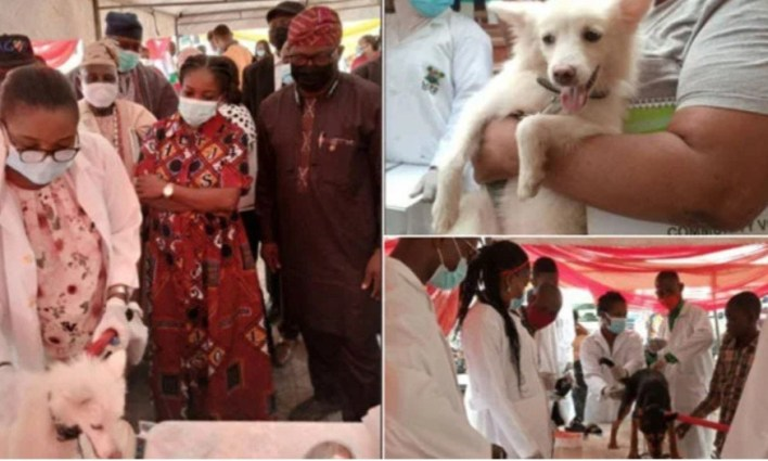PHOTOS: Lagos state to vaccinate 1.5 million dogs for free