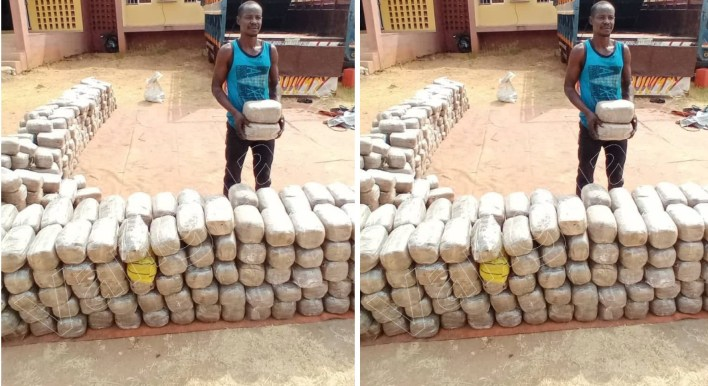 NDLEA uncovers N1.4b worth cannabis warehouse, intercepts truckload of illicit drug in Benue