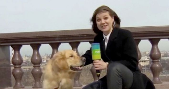 Dog steals reporter's microphone during live broadcast in Russia