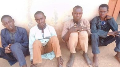 Police arrest four notorious bandits with 208 rustled animals in Katsina