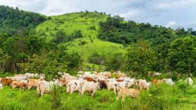 Northern reps back decision to ban open grazing in the south