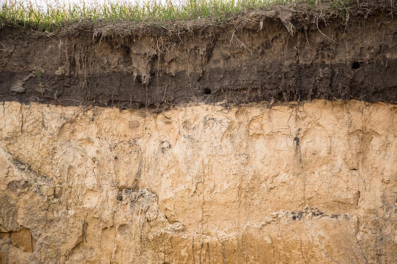 Active zone in soil surrounding home