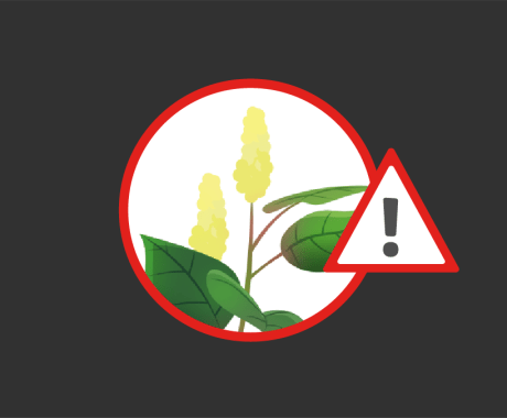 Japanese Knotweed: Home Damage in Alabama and Tennessee