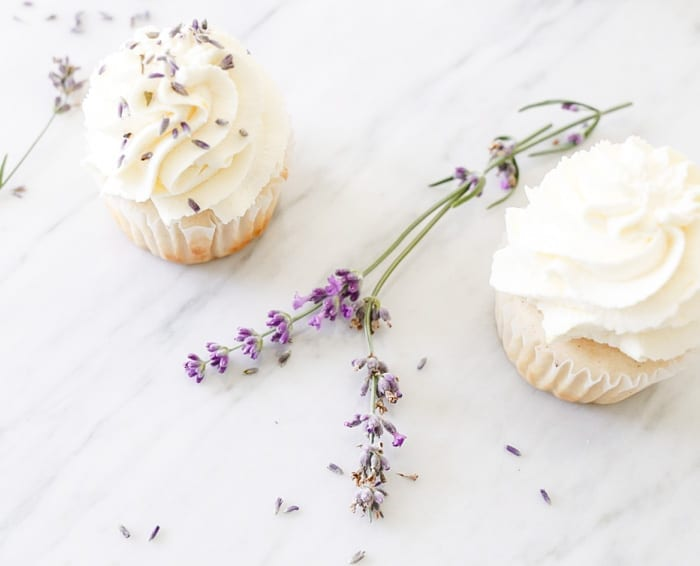 Blogger, Ashley Pletcher created a luscious lemon lavender cupcake for her cupcake of the month recipe on Afternoon Espresso.