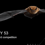 Enter for the Wildlife Photographer of the Year (WPY) 2017 for Young and Adult Photographers – UK