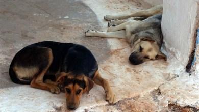 Σύνδεσμος Δυτικής Θεσσαλονίκης για τα αδέσποτα ζώα