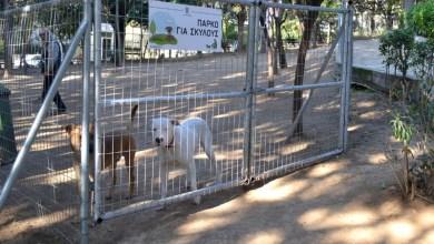 Πάρκα Σκύλων στον Δήμο Νίκαιας - Ρέντη