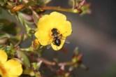 113 Harry Rappange Honey Bee