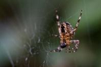 49 Saskia Otto Spider