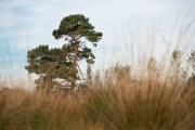 FT Buisse Heide Detty Verbon (2)