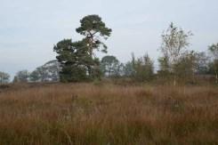 FT Buisse Heide Joop Rijndorp (2)