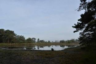 FT Buisse Heide Joop Rijndorp (3)