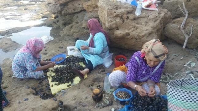 منع جمع وتسويق الصدفيات بشمال أكادير بسبب مواد بيولوجية سامة