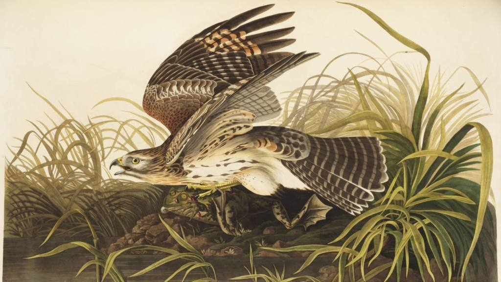 ATG Quirkies: Audubon Had to Travel to England to Be Published