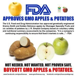 GM potatoes & apples
