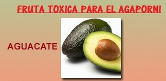 fruta prohibida toxica para agaporni