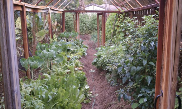 Florida_Vegetable_Garden