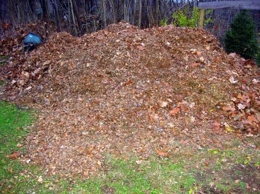 It Necessary Rake Leaves