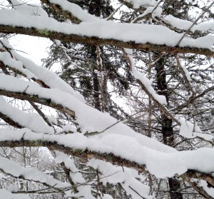 Branches-Updated