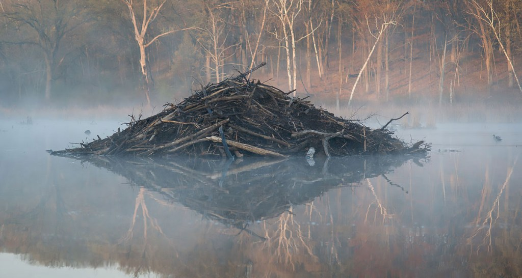 Beaver Lodge (St. Croix Valley). Photo © Bruce Leventhal