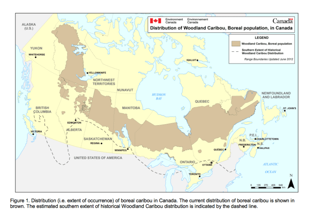 Historic and current range of woodland caribou 2012. Credit: Environment Canada.