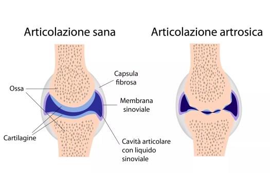 Risultati immagini per le articolazioni