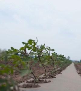AG farm