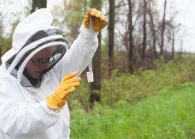 bee_apiary_1