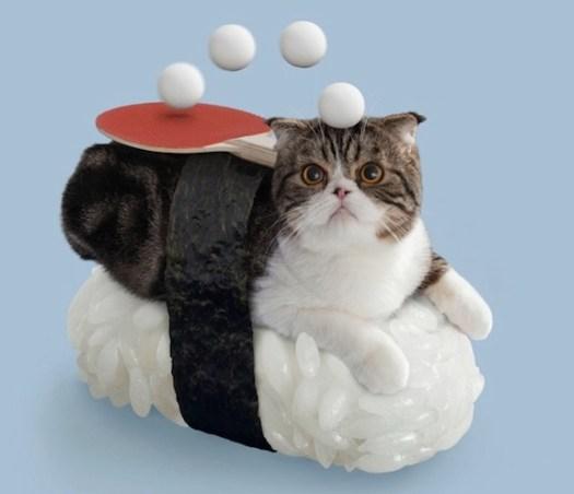 gato8