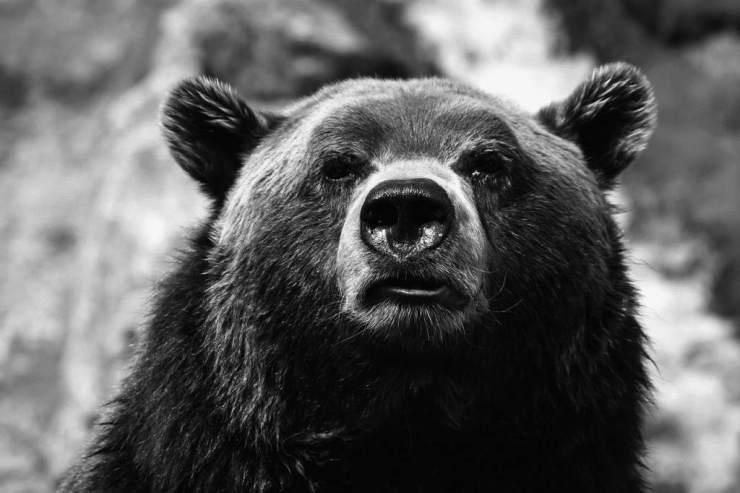 Dark bear, dark market.