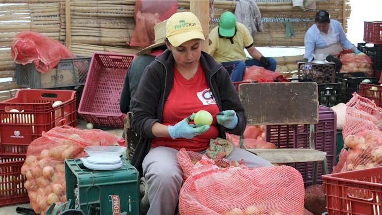 Aplicación de Comproagro traerá los frutos de la tierra a Bogotá y Tunja directamente del campo