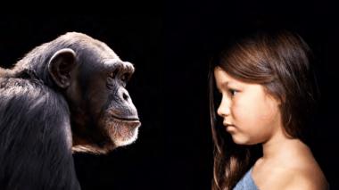 <p>El tamaño del cerebro en los primates se predice por la dieta/ Fotolia</p>
