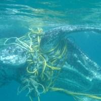 Muerte de miles de tortugas