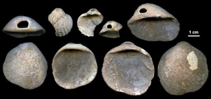 Conchas perforadas descubiertas en los sedimentos de la cueva de los Aviones de entre 115.000 y 120.000 años / J. Zilhão
