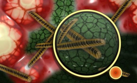 Nuestro cuerpo experimenta cada día un ejercicio de simbiosis perfecto, en el que conviven billones de células con billones de bacterias, hongos, arqueas y también virus. / Pixabay