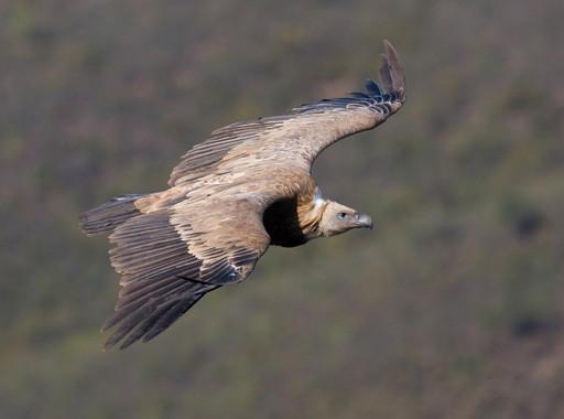 La-crisis-climatica-corta-las-alas-a-las-aves-migratorias_image_380