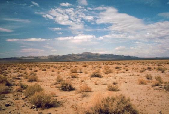 """<p>Los investigadores proponen utilizar la ingeniería genética de especies como posible actuación futura para modificar los ecosistemas en peligro / Wikimedia (<a href=""""https://commons.wikimedia.org/wiki/User:Roger469"""" title=""""User:Roger469"""" target=""""_blank"""">Roger469</a>)</p>"""