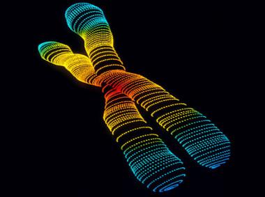 El-cromosoma-Adan-y-la-Eva-mitocondrial-aparecieron-en-la-Tierra-en-fechas-similares_image_380.jpg
