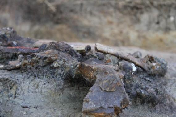 <p>Restos óseos de rinoceronte<em>in situ</em> con marcas de carnicería del yacimiento de Kalinga. / ©MARCHE, MNHN & National Museum of the Philippines</p>