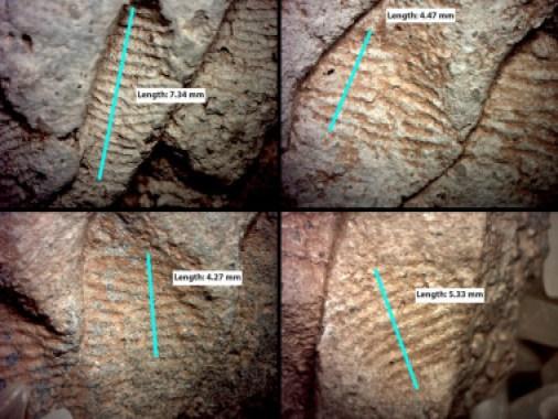 <p>Huellas dactilares ampliadas encontradas al suroeste de EE UU en fragmentos de tarros que datan del siglo XI. /John Kantner</p>