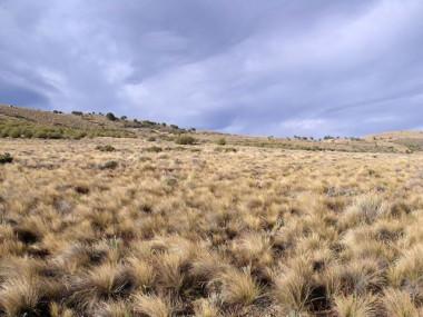 <p>Distribución de las plantas en un ecosistema árido en Argentina. / Fernando T. Maestre (URJC)</p>