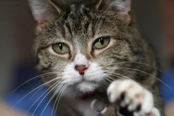"""<p>El experimento del gato cuántico en dos cajas a la vez ayuda a entender mejor el concepto de entrelazamiento cuántico. /<em> </em><a href=""""http://upload.wikimedia.org/wikipedia/commons/b/bb/Kittyply_edit1.jpg"""" target=""""_blank"""">Wikipedia</a></p>"""