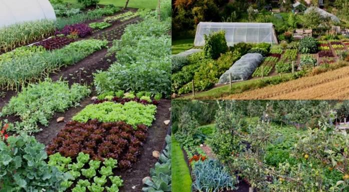 Kaj imata skupnega grafično oblikovanje in vrtnarjenje
