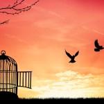Falando de liberdade