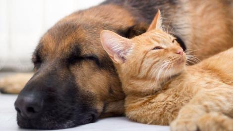 Toelettatura: Cani e Gatti ad Avellino