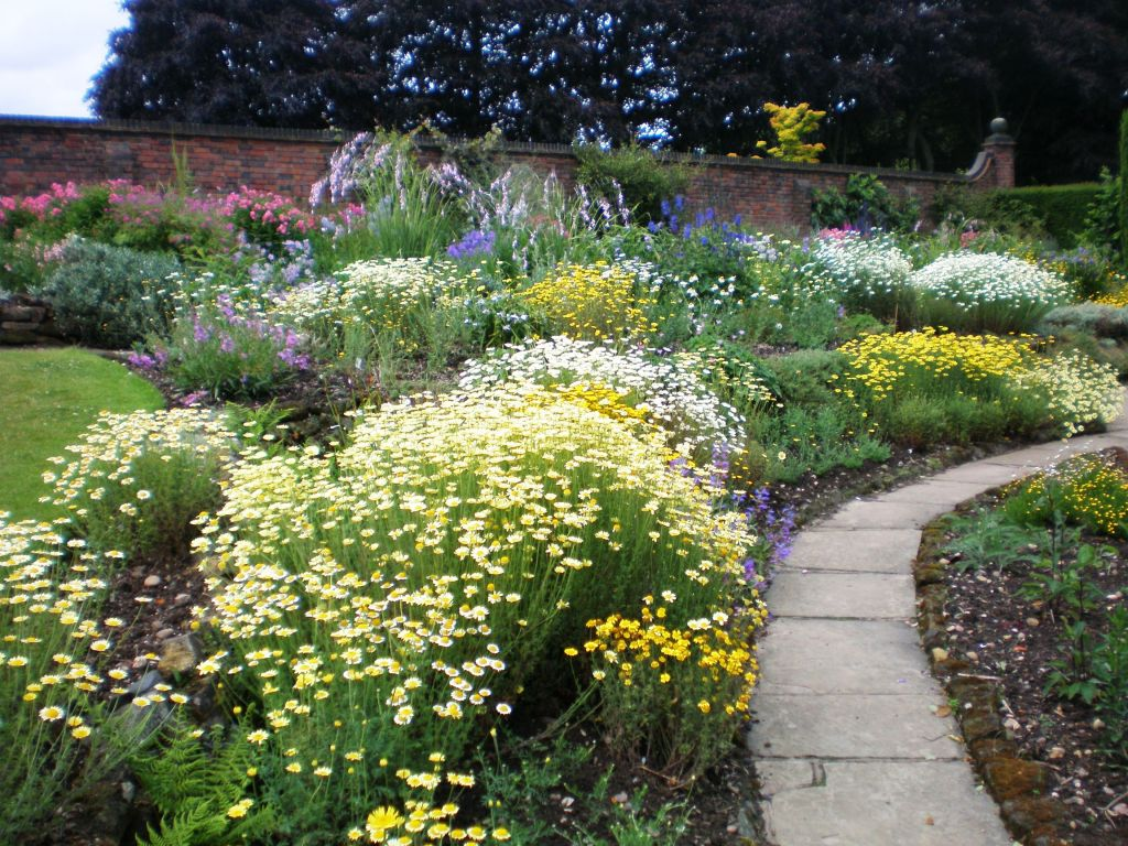 Picture of colourful walled garden with flower borders and path