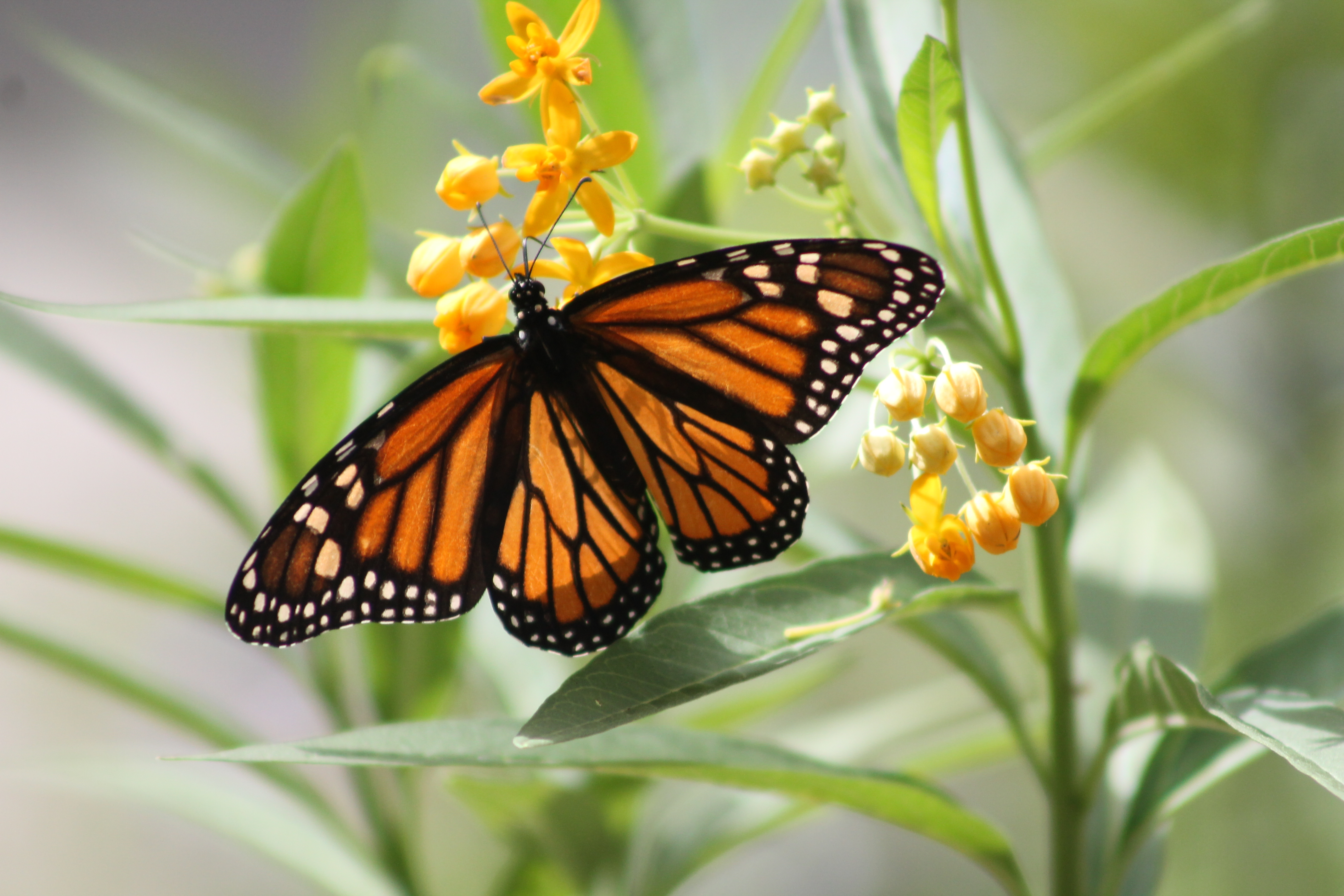 Monarch Butterfly Station Aging Journey