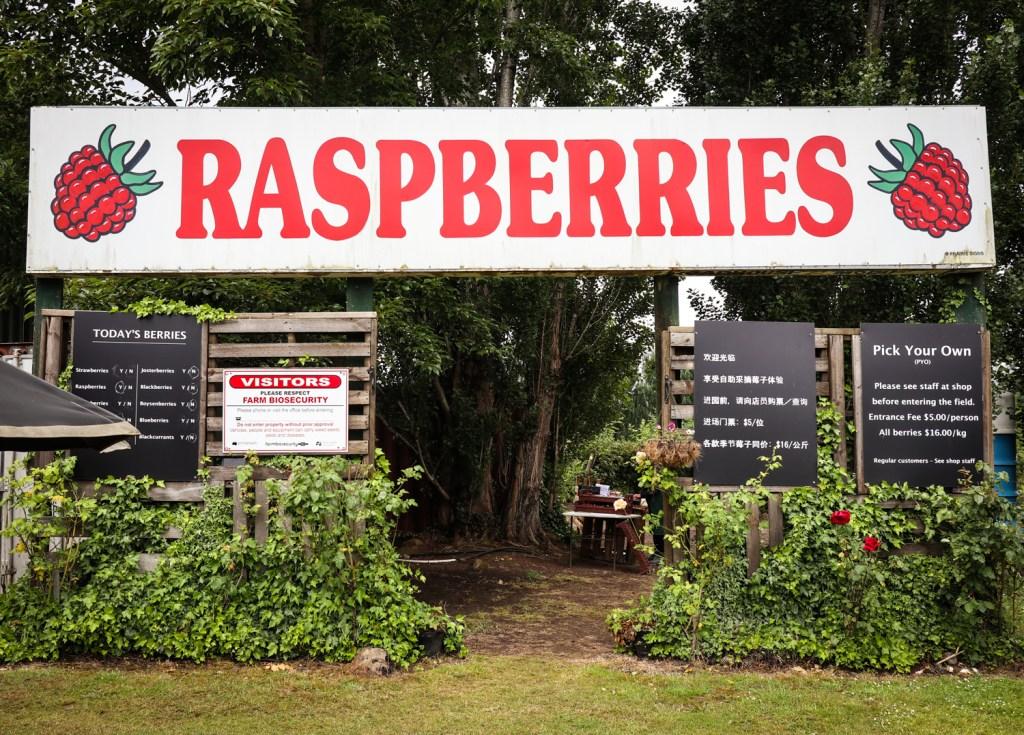 Westerway Raspberry Farm in Tasmania