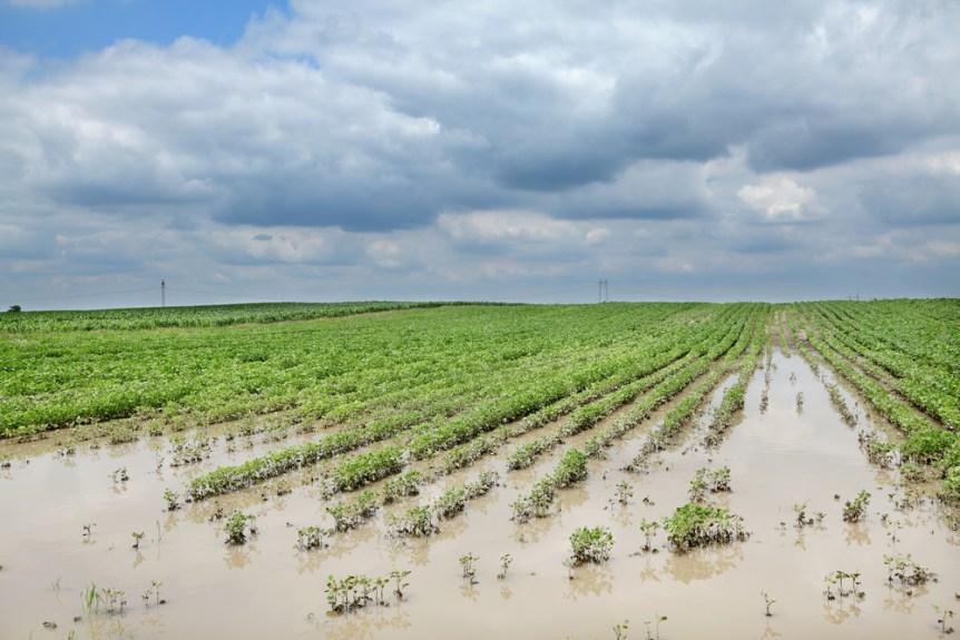 crop insurance weather